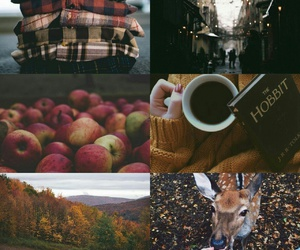 aesthetic, apples, and autumn image