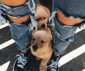 adorable, denim, and dogs image