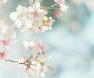 asia, cherry blossom, and tree image