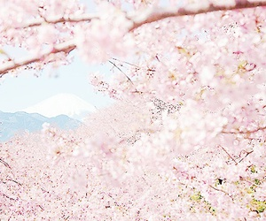 asia, flowers, and beautiful image