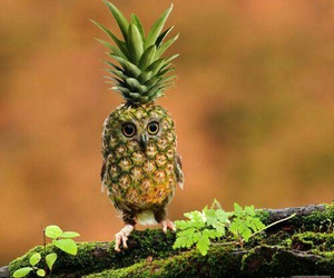 pineapple, funny, and owl image