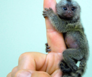 monkey, animal, and fingers image