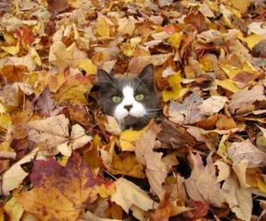 kitten, autumn, and cat image