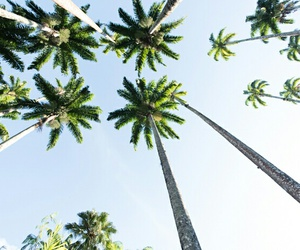 exotico, tropical, and paradise image
