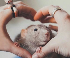 heart and rat image