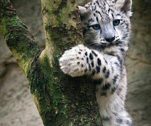 adorable, leopard, and animals image