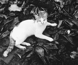 black and white, cat, and nature image