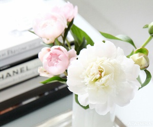 books, classy, and flower image