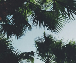 palmtrees, sadness, and summer image