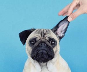 pug, dog, and animals image