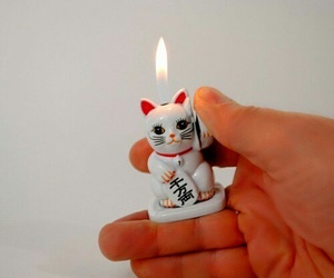 lighter, cat, and fire image