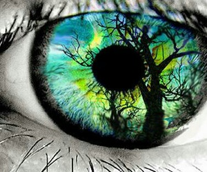 eye, eyes, and tree image