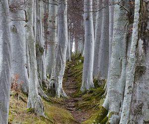 tree and path image