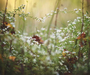 autumn, leaves, and daisies image