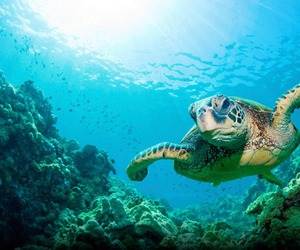 turtle, ocean, and photography image