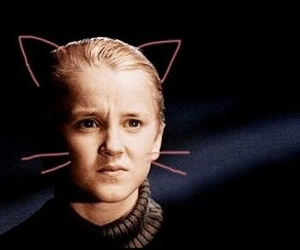 harry potter, cat, and draco malfoy image