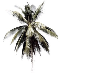 girl, palm trees, and photography image