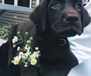 dog and flower image