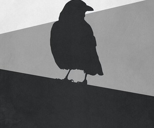 game of thrones, wallpaper, and raven image