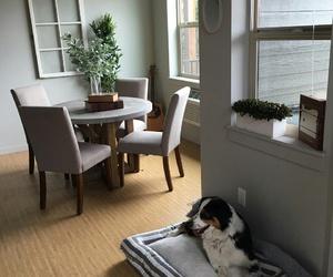 dog, goals, and apartament image