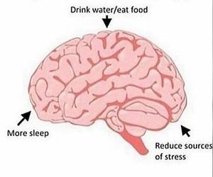 brain and helpful image