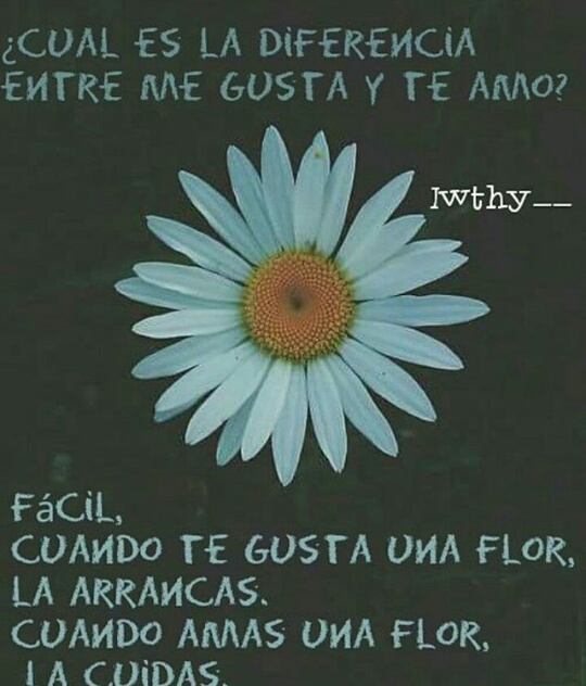 amor, frases, and endless love image