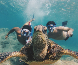 summer, turtle, and sea image
