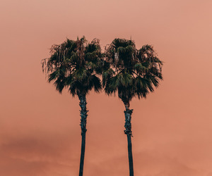 orange, palms, and sunset image