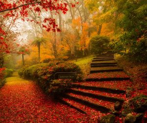 autumn, nature, and leaves image