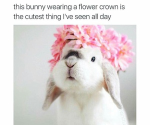 flowers, rabbit, and white image