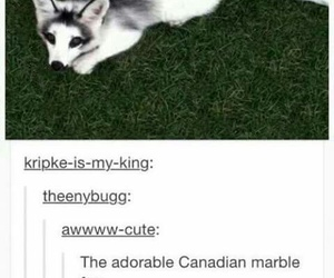 funny, canada, and animal image