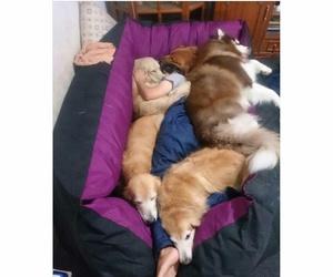 dog and me image