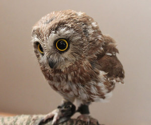 baby, cute, and owls image