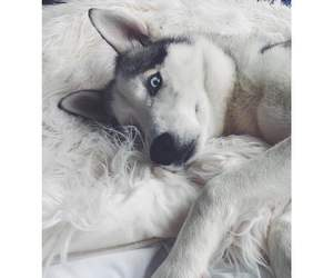 animal, dog, and beautiful image
