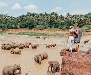 elephant, travel, and couple image