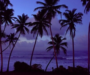 purple, summer, and palm trees image