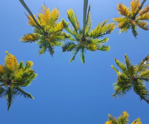 blue, palmiers, and palmtree image