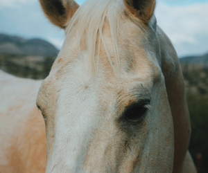 horse and indie image