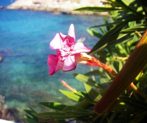 blue, flower, and sea image