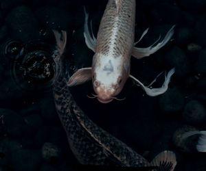 fish, dark, and theme image