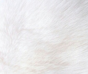 wallpaper, white, and fur image