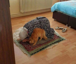 cat, islam, and muslim image
