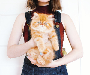 adorable, blogger, and cat image