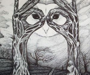 drawing, owl, and beautiful image