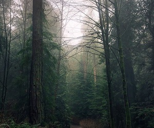 grunge, nature, and trees image