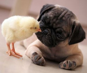 cute, love, and Chick image