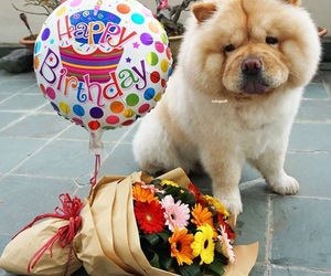 chow chow, dog, and happy birthday image