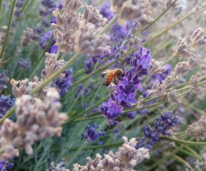 bee, flowers, and honey image