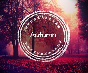 autumn, pink, and red image