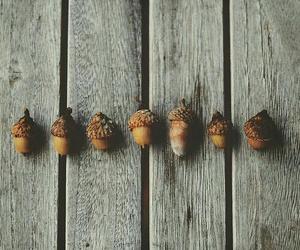 autumn, fall, and acorn image
